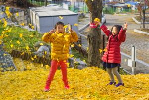 세종시 비학산 둘레길 단풍을 구경하고 낙엽을 밟으며