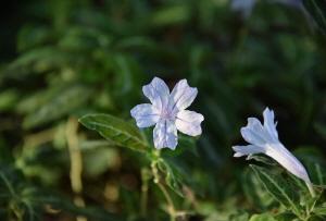 겨울 속 따뜻한 봄 향기, 금강수목원
