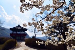 세종 금강자연휴양림에서 꽃길만 걷자 :-)