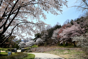 봄꽃 따라 운주산성 걸으며 백제의 향기 느껴보자