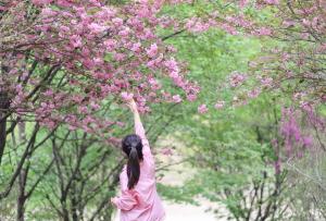 세종에서 만나는 겹벚꽃 : 원수산과 영평사