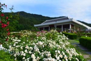 금강자연휴양림을 수놓은 장미꽃의 향연