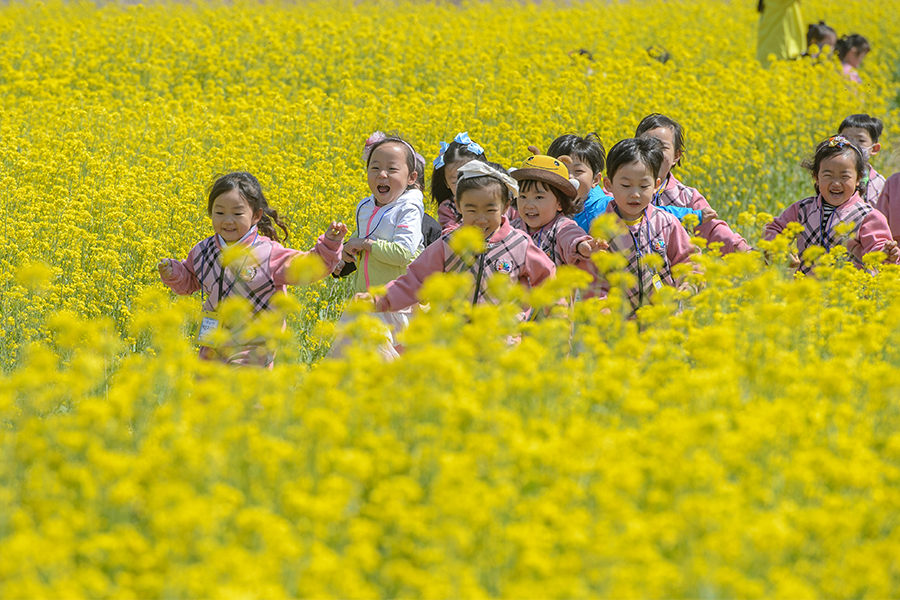 image-Mihocheon Streamside Rape Flower Festival