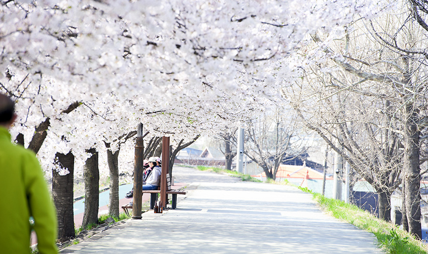 Three Major Cherry Blossom Paths 9