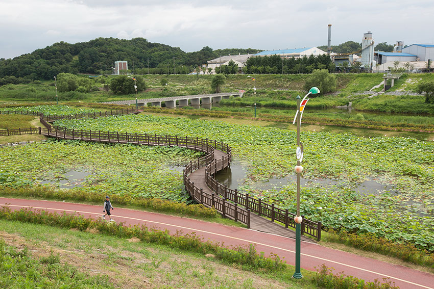Jocheon Lotus Flower Park 5