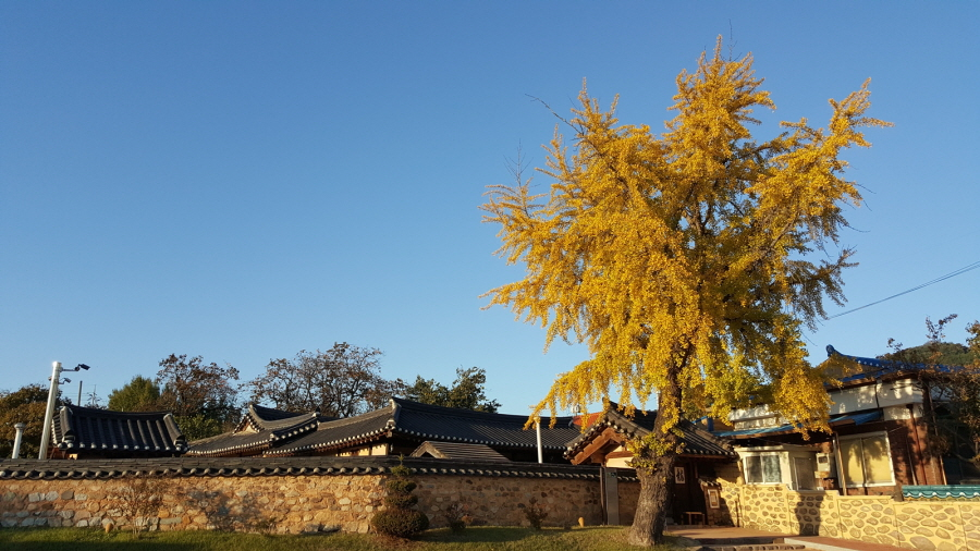 The Historic House of Bugang-ri in Sejong Welcomes Fall - To look into the charm of traditional house from the tourist attraction of Sejong